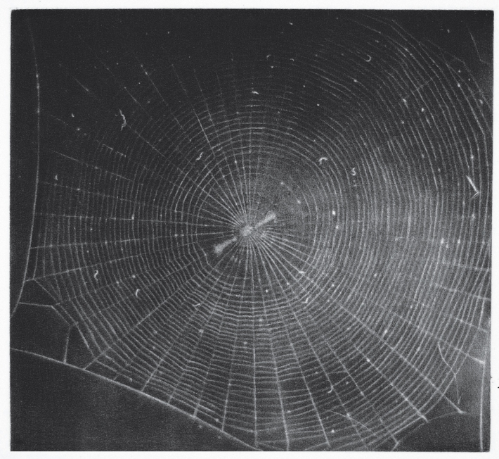 Untitled-Web-2-Mezzotint-on-Hahnemuhle-Copperplate-paper