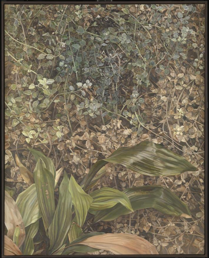 Two Plants 1977-80 by Lucian Freud 1922-2011